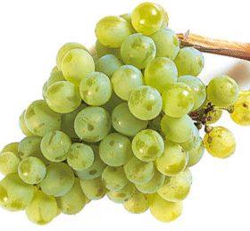 Racimo de uva verdejo